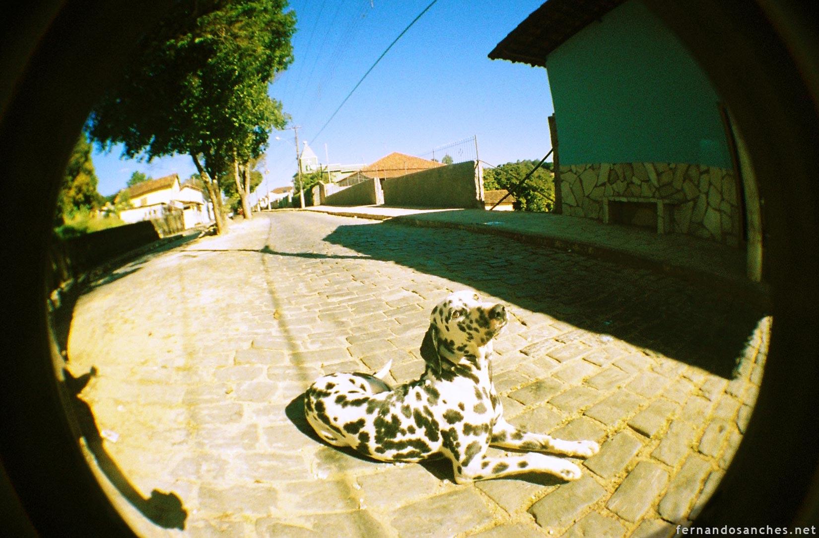 dogsinfisheye_01_
