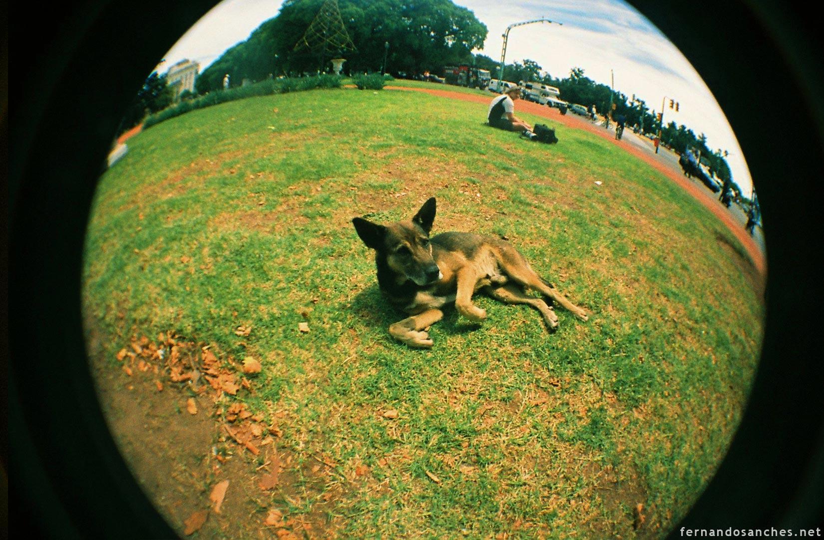 dogsinfisheye_02_