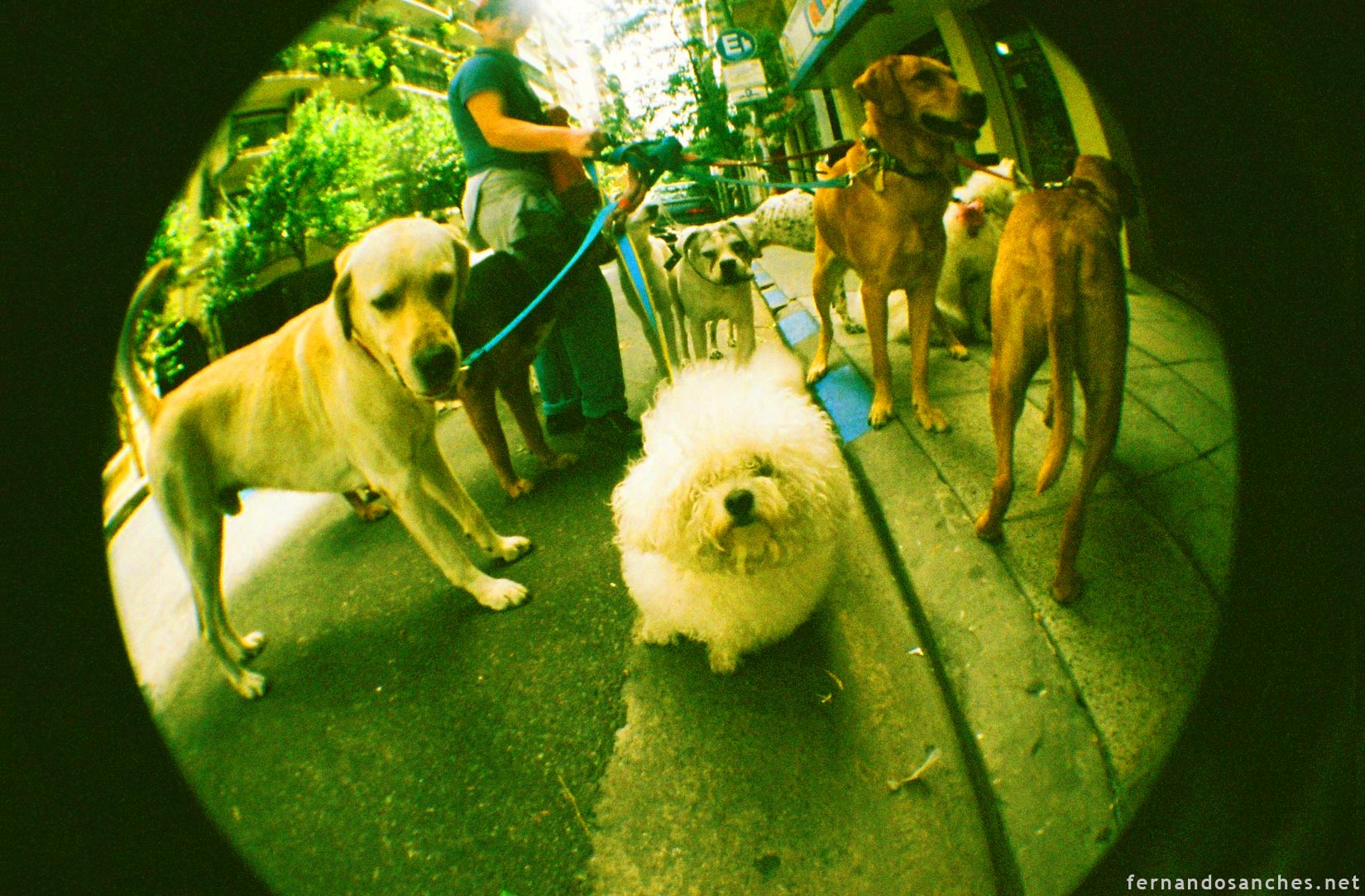 dogsinfisheye_03_