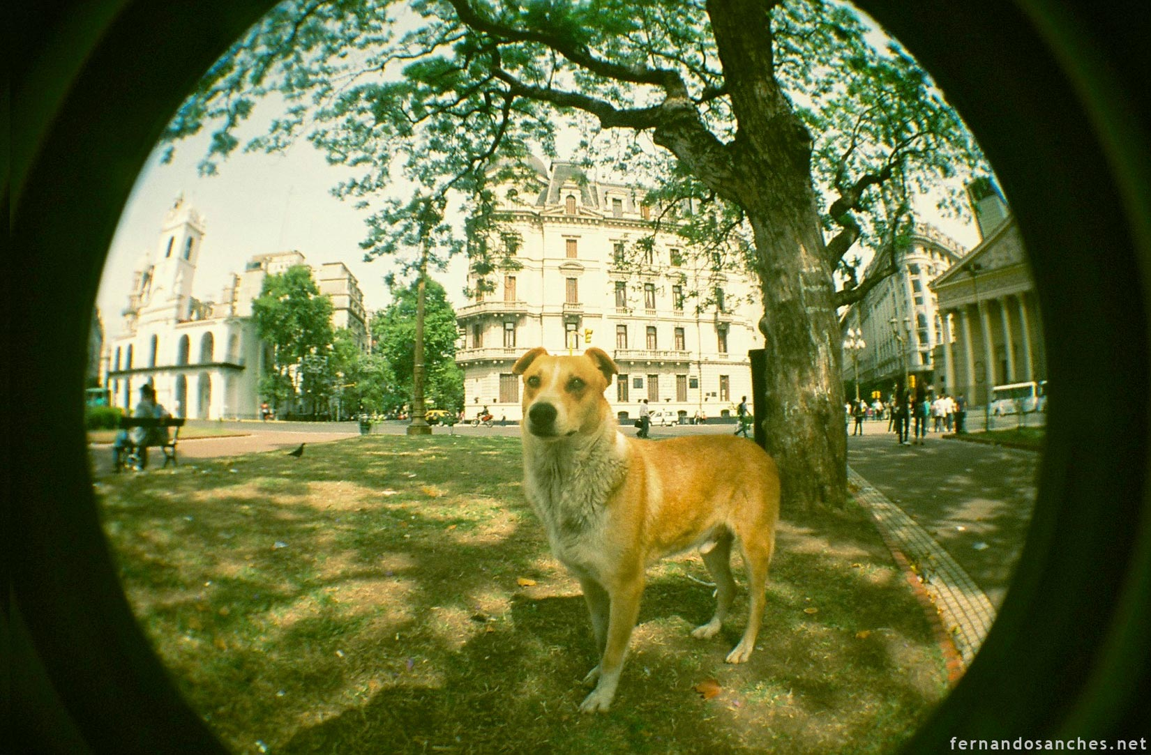 dogsinfisheye_04_