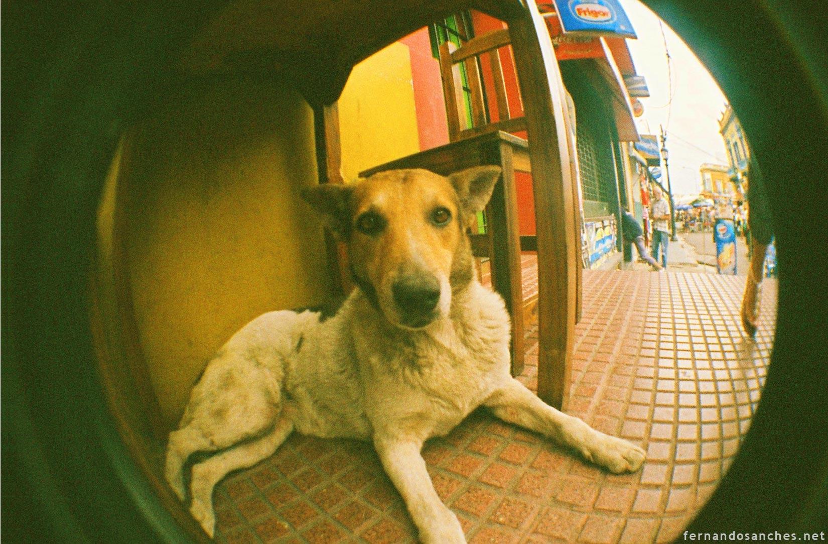 dogsinfisheye_05_