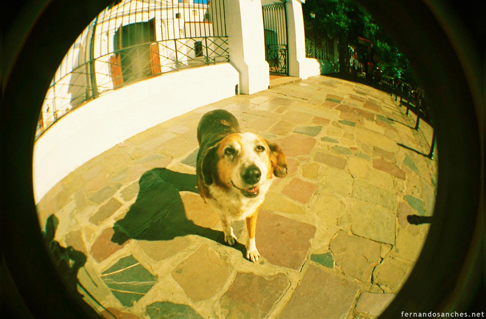 dogsinfisheye_06_