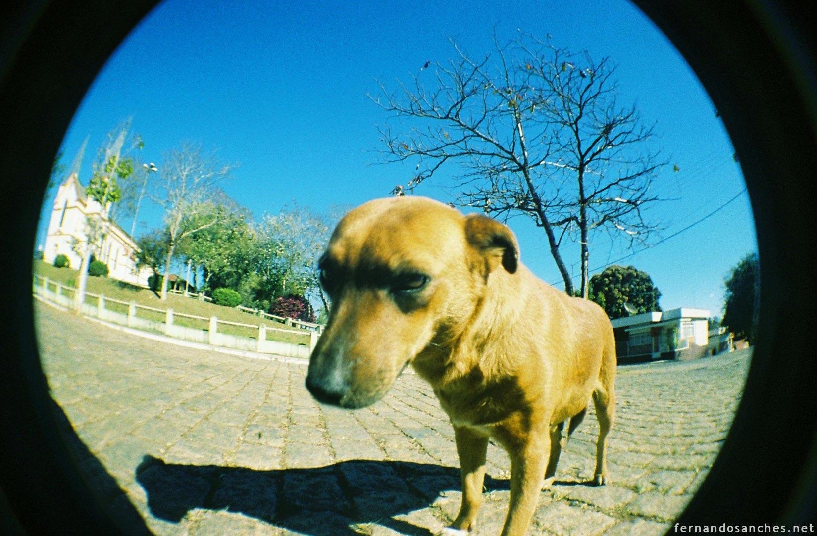 dogsinfisheye_07_
