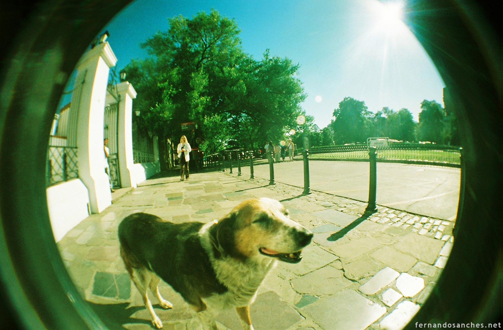 dogsinfisheye_08_