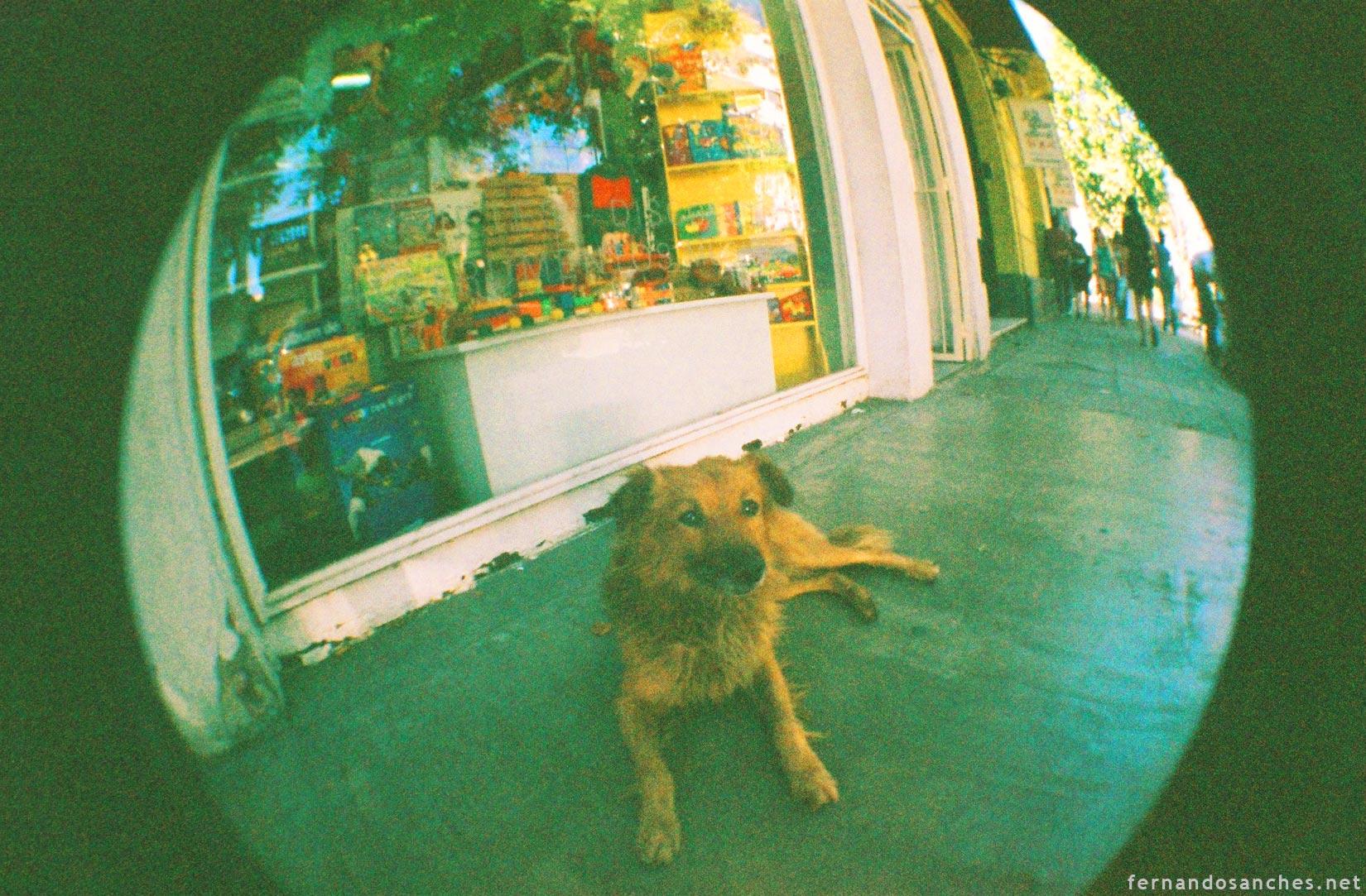 dogsinfisheye_09_