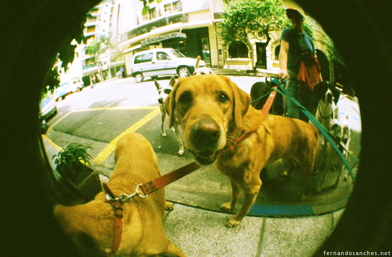 dogsinfisheye_10_