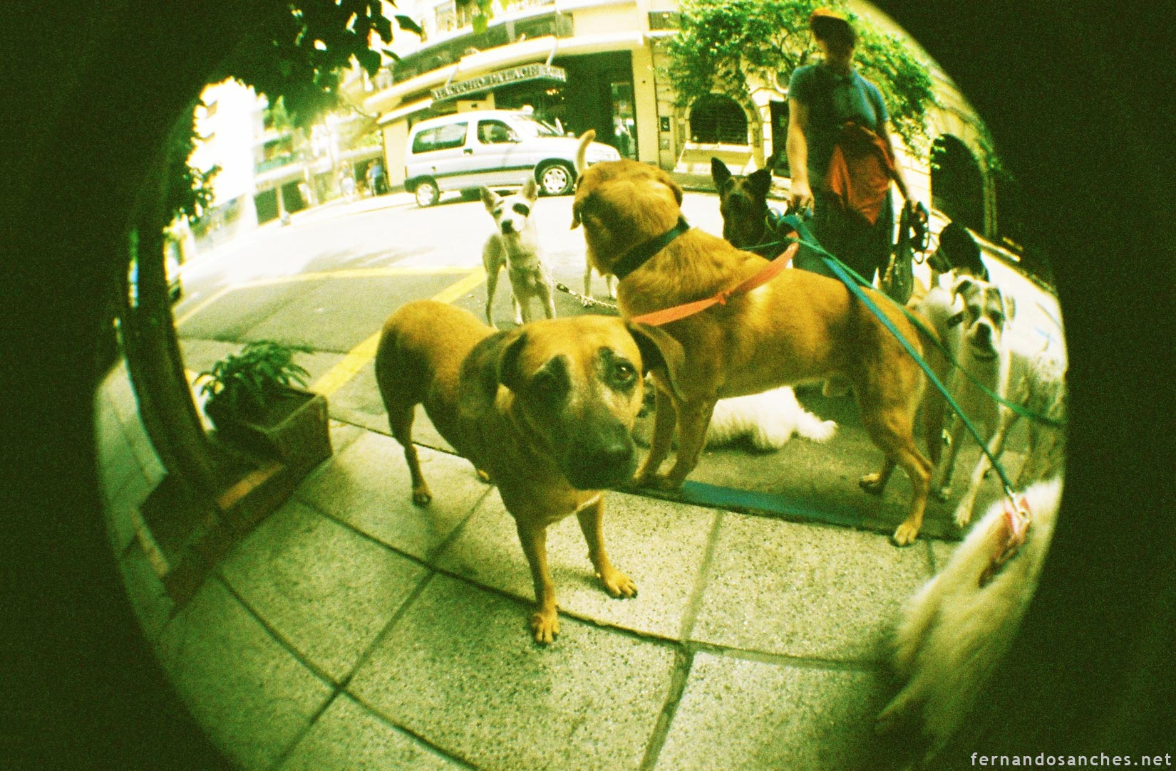 dogsinfisheye_11_