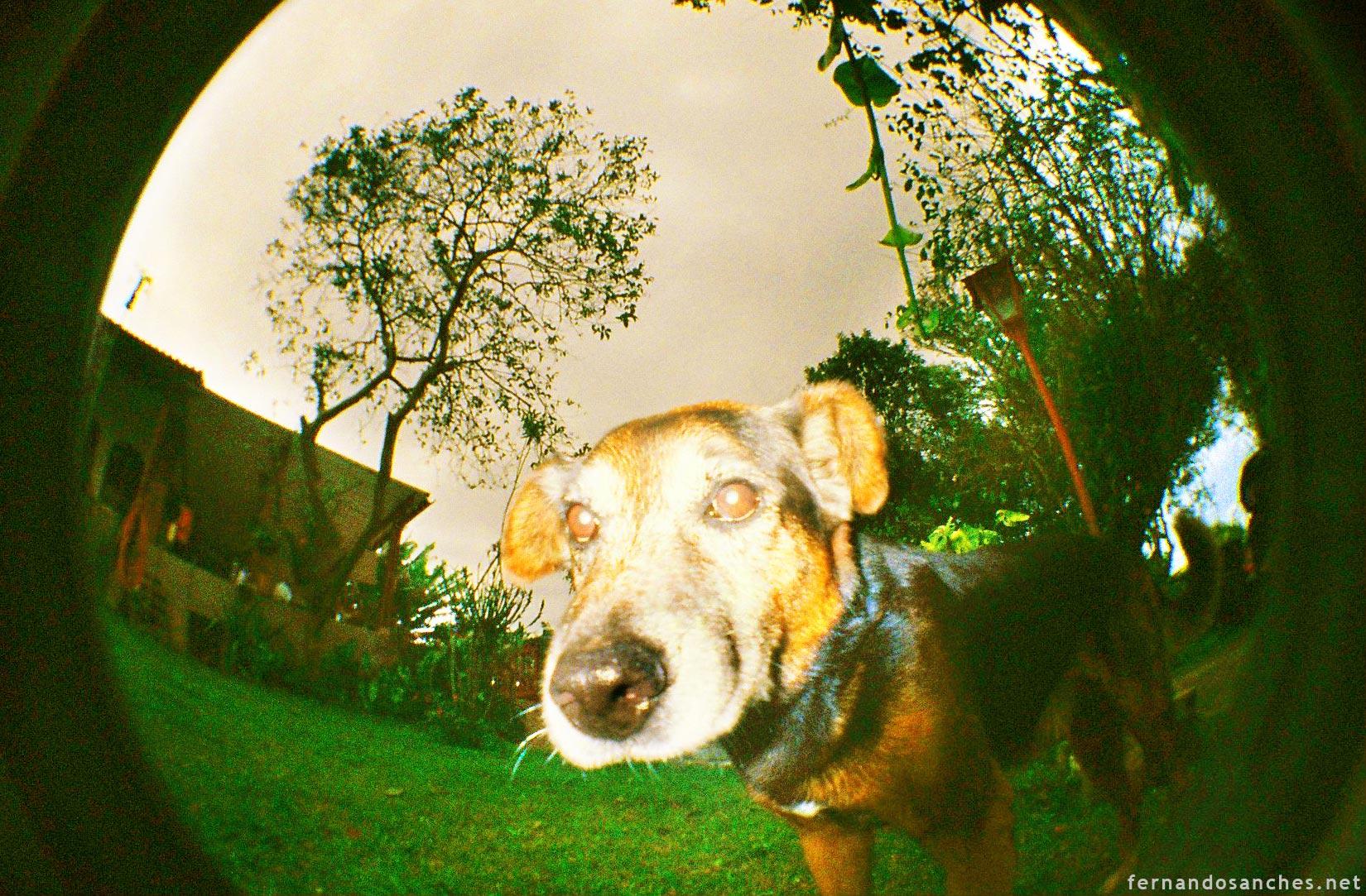 dogsinfisheye_12_